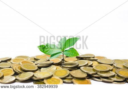 Coin Stack Money Saving Concept. Green Leaf Plant Growth On Rows Of Coin On White Background. Money