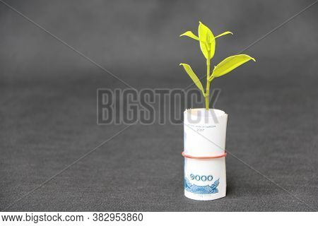 Rolled Banknote Money One Thousand Cambodian Riel And Young Plant Grow Up With Dark Grey Floor And B