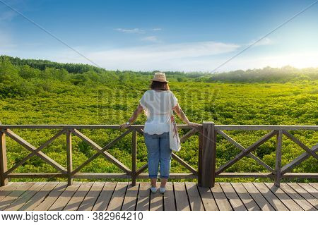Asian Women On Wooden Bridge With Colorful Yellow Green Leaves All Around. Mangrove Forest Ecotouris