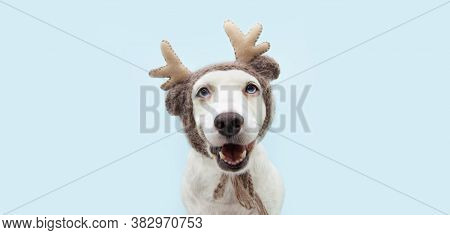 Funny Christmas Dog Pet Portrait Wearing A Reindeer Antlers Cap. Isolated On Blue Background.