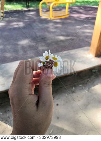 Raised Female Hand Holds Small Bouquet Of Five Wild Daisies Against Clear Blue Sky. Walk In The Open
