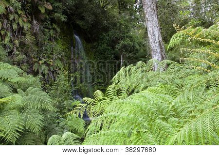 Waterfall Behing The Fems