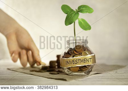 Investment. Glass Jar With Coins And A Plant, In The Background A Female Hand Puts Coins Near A Glas