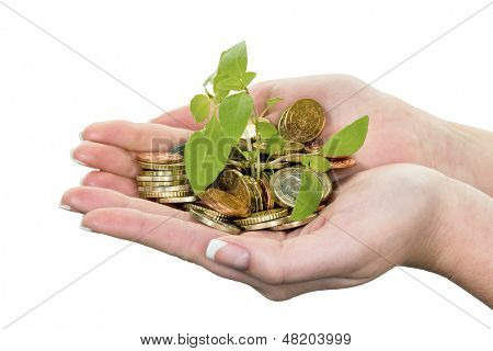 money and plant. photo icon for saving on white background