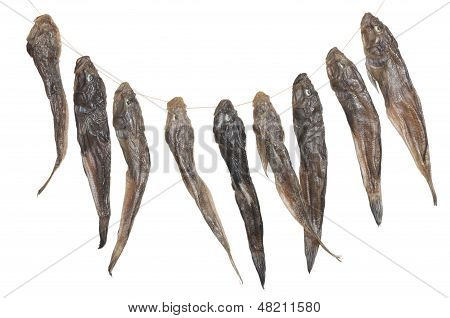 bunch of dried fish isolated on white background poster