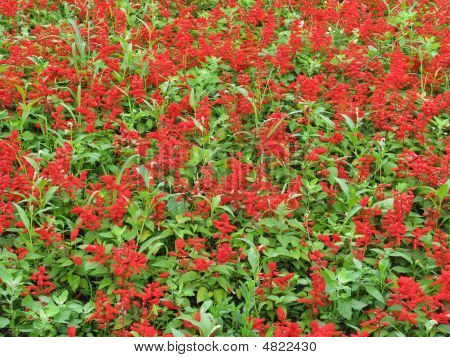 Blooming flowerbed with red flowers and green grass in park poster