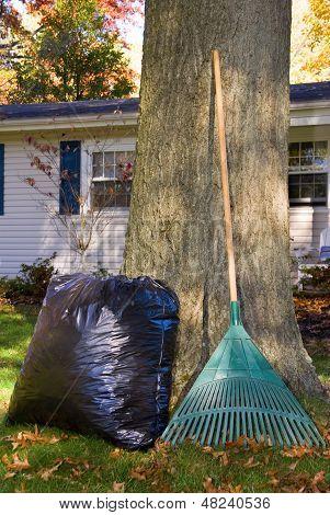 Raking Leaves Bag And Rake By Tree