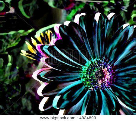Colorful Gerbera Daisy Illustration