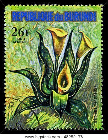 Republic Of Burundi - Circa 1974: A Stamp Printed In Republic Of Burundi Shows Zantedeschia Tropical