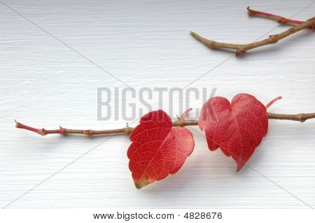 Natural Love Leaves