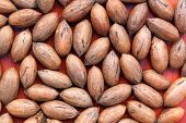 A collection of regular unshelled pecan nuts on a red background poster