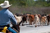 Cowboy driving cattle in a farm use of selective focus. poster