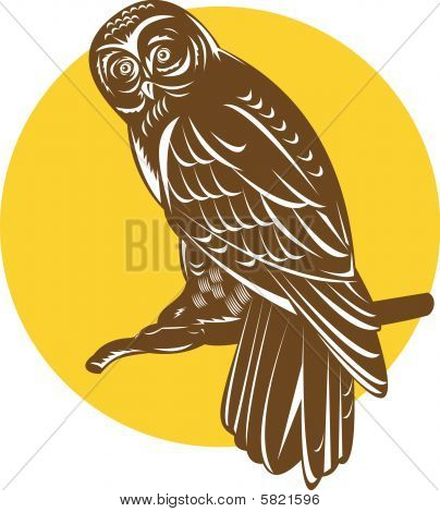 vector illustration of an Owl perched on a branch poster