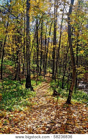 Autumn Forest With A Footpath