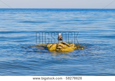 One Seagull Stending On Steady Stones In Blue Sea