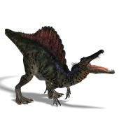 dinosaur Spinosaurus. 3D render with clipping path and shadow over white poster