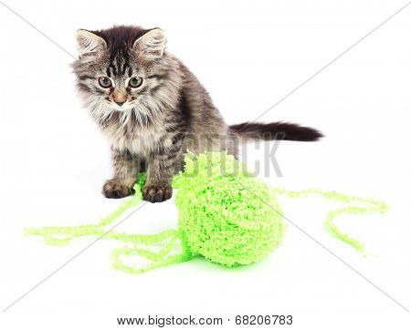 Funny gray kitten and ball of thread isolated on white poster