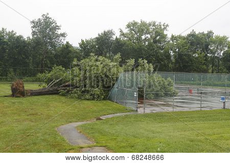 Fallen tree damaged power lines in the aftermath of  severe weather and tornado in Ulster County, NY