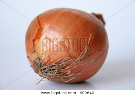 Onion Isolated