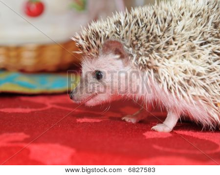 Hedgehog In Defense