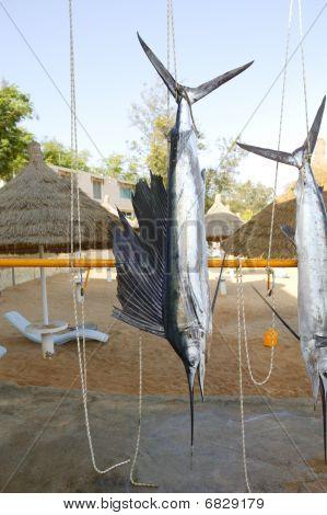 Sailfish Catch Hanging Marlin Fishing Trophy