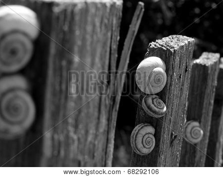 snails on old wooden fence in black and white