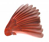 Bird Wing (male Northern Cardinal) with clipping path. poster