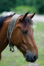 Portrait Of A Brown Horse