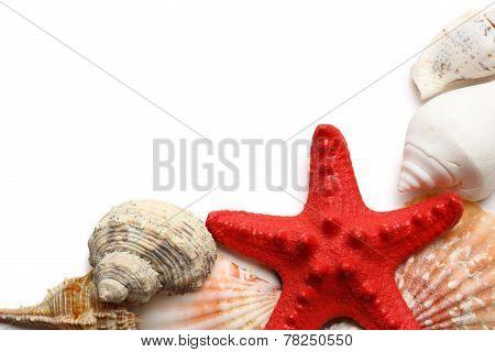 Seastar And Seashells On White
