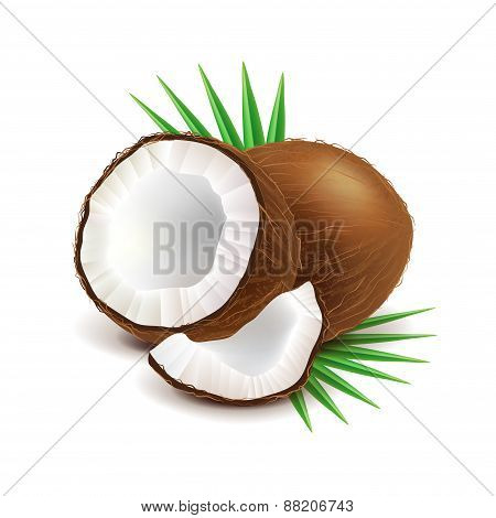 Coconut And Slice Isolated On White Vector