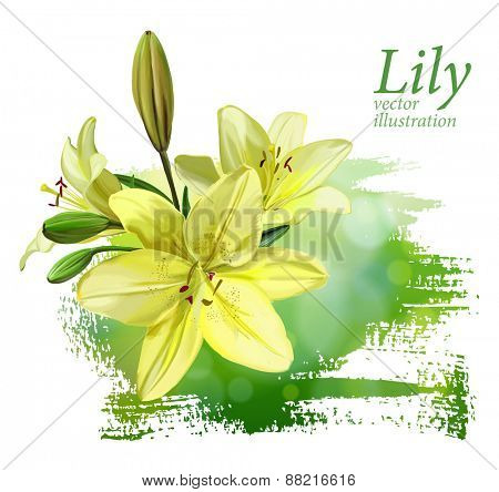 Yellow Lily. Vector illustration. Eps10