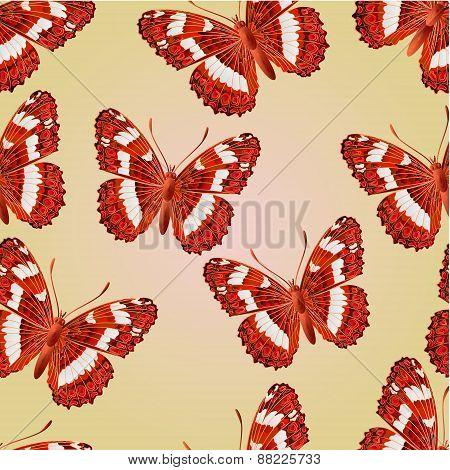 Seamless Texture Butterfly Limenitis Camilla   Vector