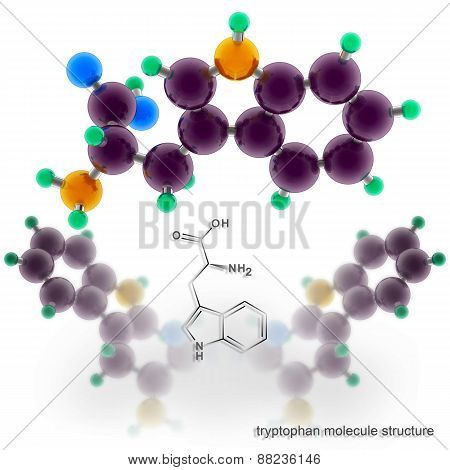 Tryptophan Molecule Structure