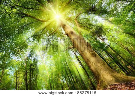 Magical Mood With Sunrays In A Forest