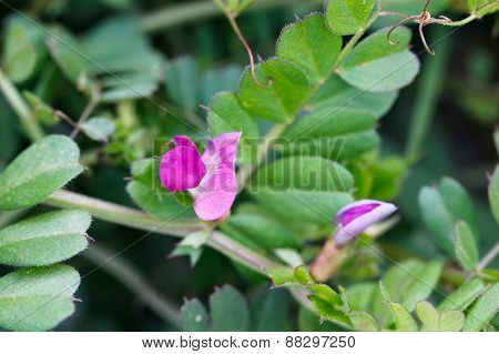 Grass with pink flowers.