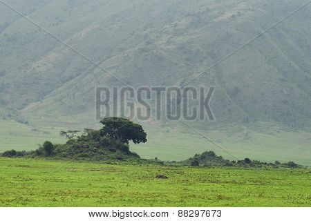 Landscape of early evening inside Ngorongoro crater in Tanzania poster
