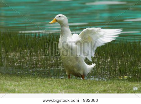 Open White Wings