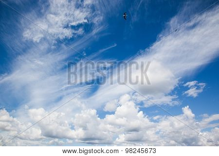 Different Types Of Clouds On Blue Sky, Sea Gulls With Motion Blur