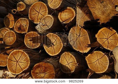 Seasoning Logs