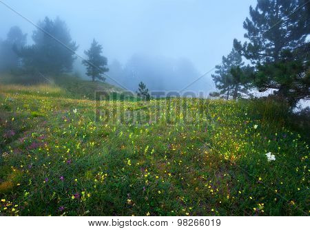 Path through a mysterious dark old forest in fog on the top of the mountain. Summer morning in Crimea. Magical atmosphere. Fairytale poster