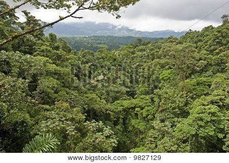 Selva tropical en Costa Rica