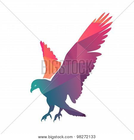 Colorful Eagle