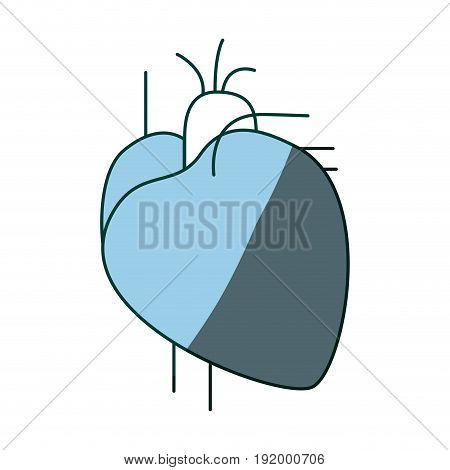 blue color shading contour heart system human body vector illustration