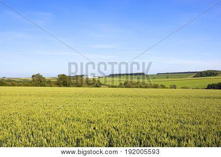 Scenic Wheat Crop