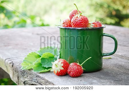 Enameled Mug Of Strawberries And Berries On Background In Garden Outdoors.