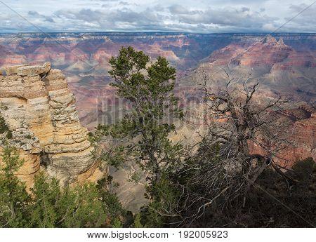 Nice tree above South Rim of Grand Canyon, Arizona, United States