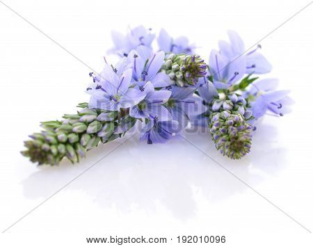 Blue summer flowers isolated on white background