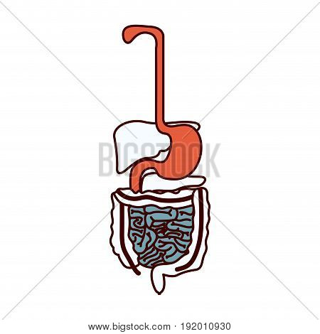 color sections silhouette human digestive system vector illustration