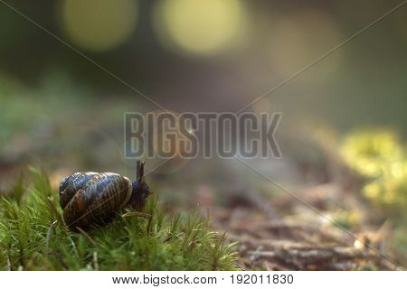 The Garden Snail Woke Up In The Forest On Soft Moss, Gets Out Of The Sink And Looks Around