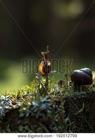 A Small Snail Climbed A Vertical Twig In The Forest And Looks Out Of The Way, Illuminated By The Sun